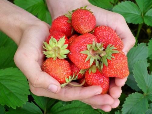 Strawberries (courtesy-pixabay.com)