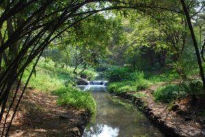 Osho Garden- Pune
