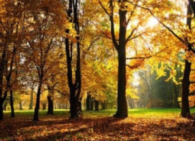 Autumn in Kashmir (Photo courtesy-skymet)