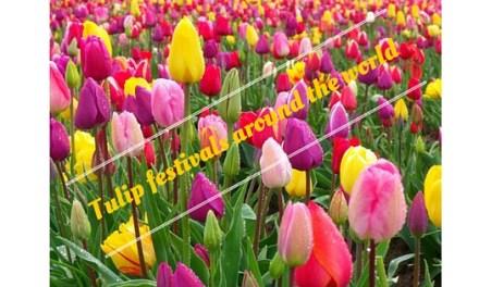 Tulip festivals around the world