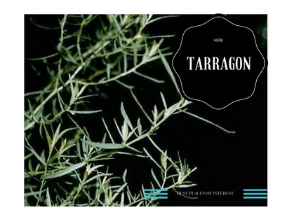 Herb It Up With Tarragon
