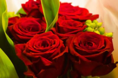 red rose valentine day
