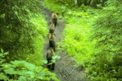 Rovers Run Trail Alaska, dangerous national parks in America
