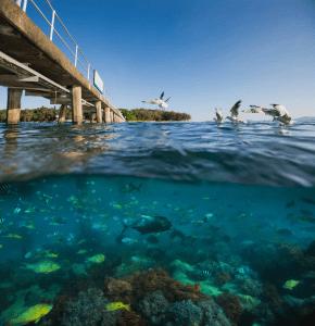 Green islands- Great Barrier Reef