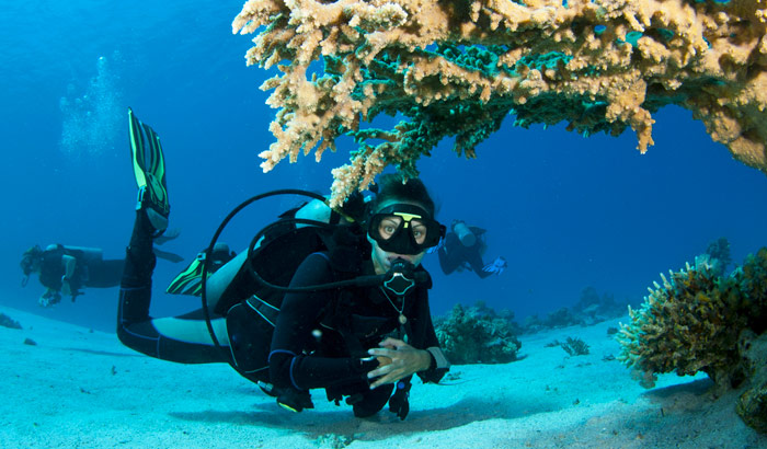 Diving on the island of Havelock