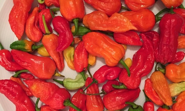 Have you had the spiciest food in India?