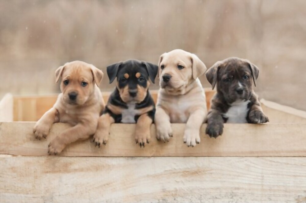 Puppy Care Seven Tips Advice For Dog Owners