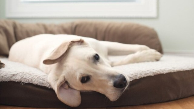 The Benefits of Dog Beds For Small and Large Dogs