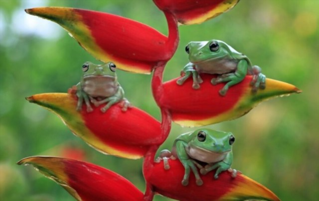 Some Things You Should Know About Types Of Am amphibians