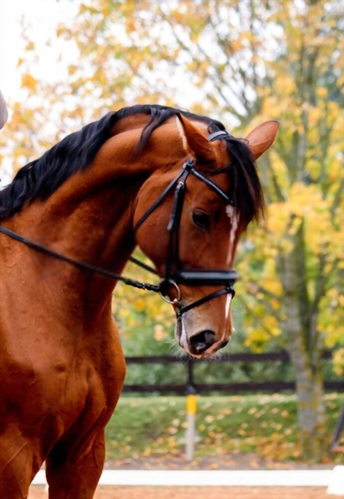 What Are Para Dressage