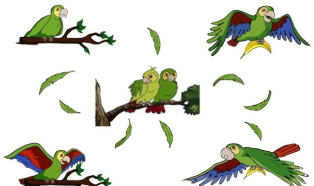 What Type of Parrot Can Talk?