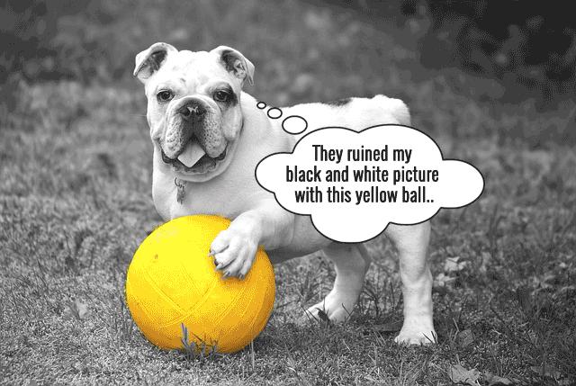 06-dog-black&white