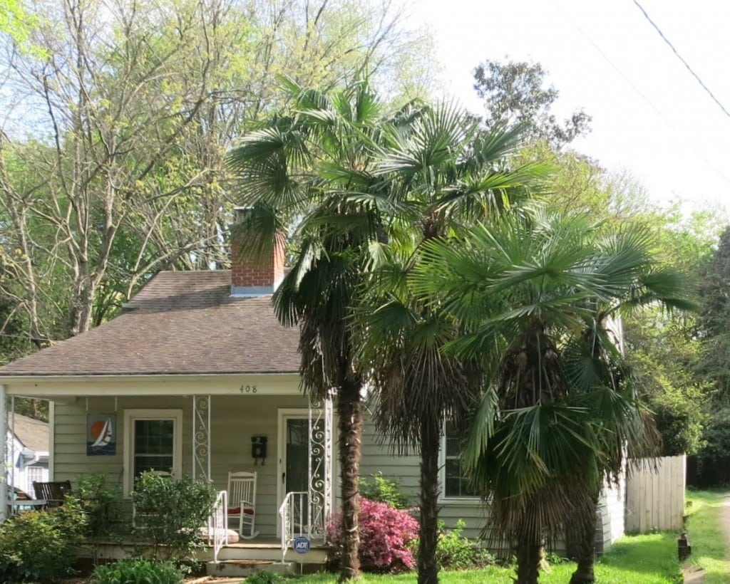 408 Glascock Street. Palms are doing well for Raleigh. Best Raleigh Neighborhoods, Inside-the-Beltline, Mordecai