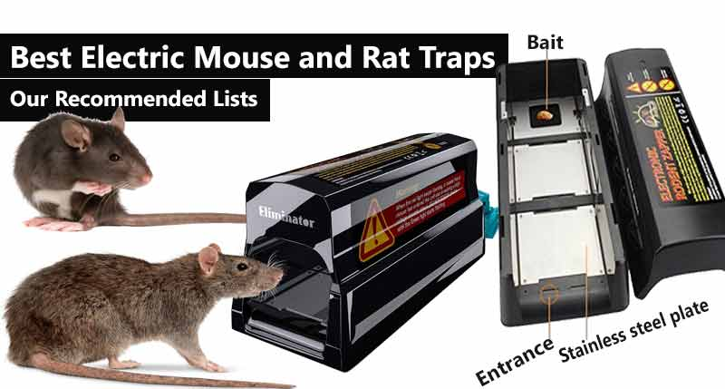 Best Electric Mouse and Rat Traps