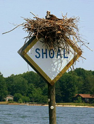 Lake Norman Shoal warning sign with bird nest