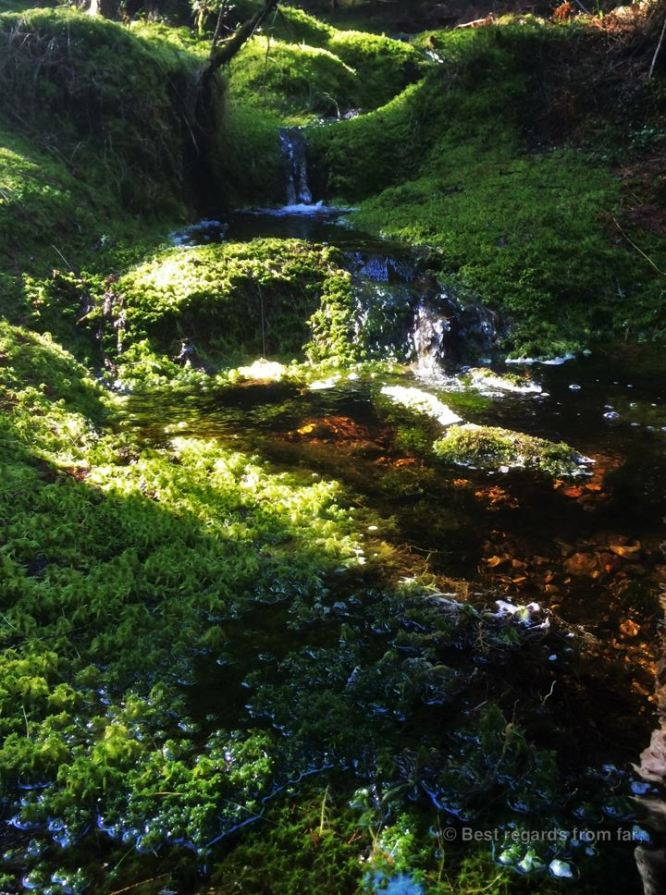 Melting snow creating translucent streams winding through the thick moss in Skuleskogen National Park