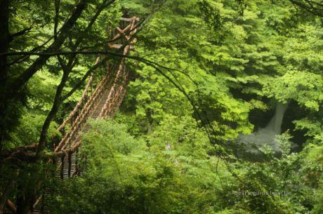 Vine bridge by a waterfall