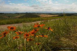The bucolic landscapes of Biei