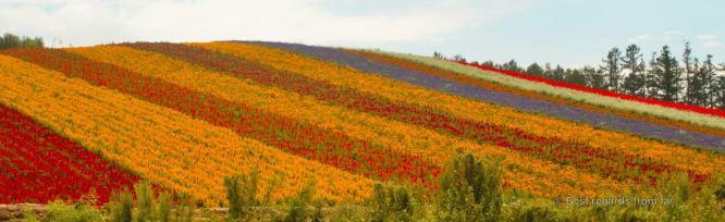 Flower fields along patchwork road, Biei