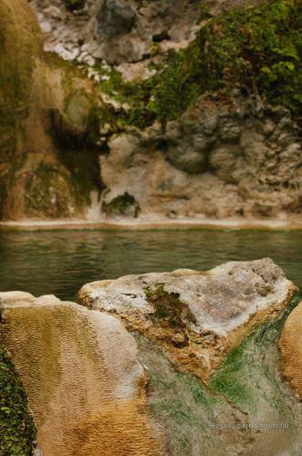 Wild onsen in the forest
