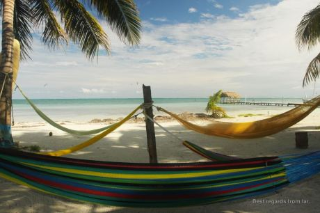 Hang in there… Caye Caulker, Belize