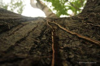 Tree trunk in Miraflor, Nicaragua