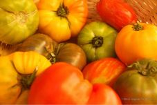 Locally grown tomatoes from the market, Toulon