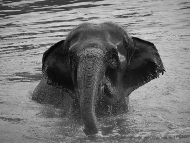 The bathing elephant of Ayutthaya, Thailand