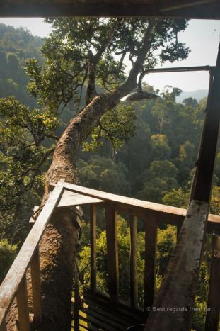 A shower with a view, The Gibbon Experience, Laos