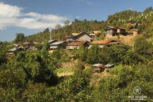 Ban Komaen Tea Village, Pongsali, Laos