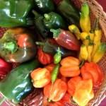 Tag der Paprika
