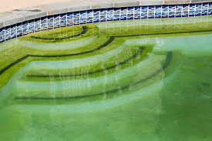 How To Get Rid Of Algae In Pools?