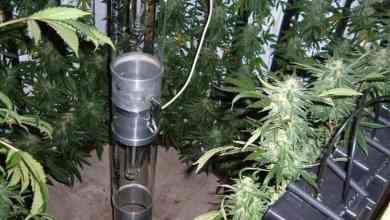 Photo of Heath Robinson Vertical Grow Using Rockwool Slabs: Part 2