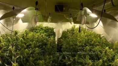 Photo of Easy Grow Room Ventilation Setup 101 All You Need To Know