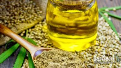 Photo of The Difference Between Hemp And CBD Oil