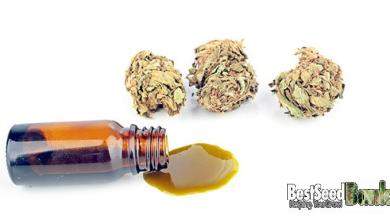 Photo of Does cannabidiol have side effects? – CBD in medicine