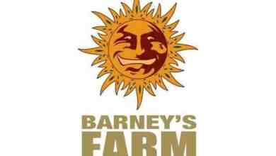 Photo of Barney's Farm Breeder Review