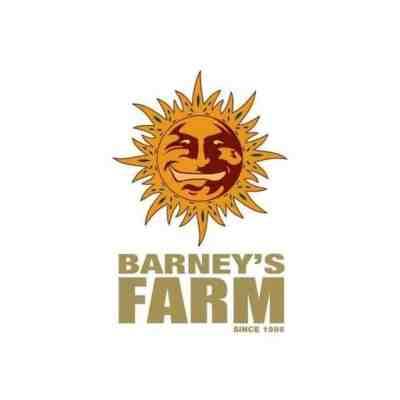 Barney's Farm Breeder Review