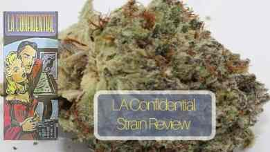 Photo of L A Confidential Strain Review