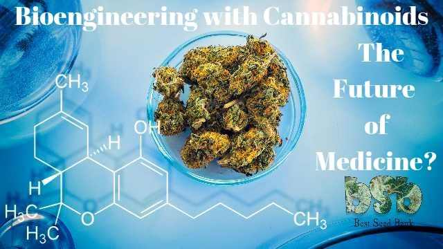 Photo of Bioengineering with Cannabinoids