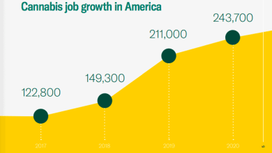 Photo of The cannabis industry has created 243,700 new jobs in the US