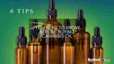 Photo of Six Tips You Need to Know Before Buying Cannabis Oil