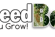 Photo of About Best Seed Bank
