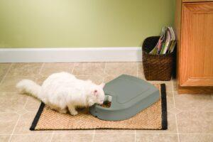 a cat reviewing the PetSafe 6 meal cat feeder
