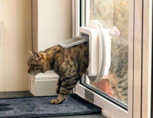 review of SureFlap Microchip Cat Door