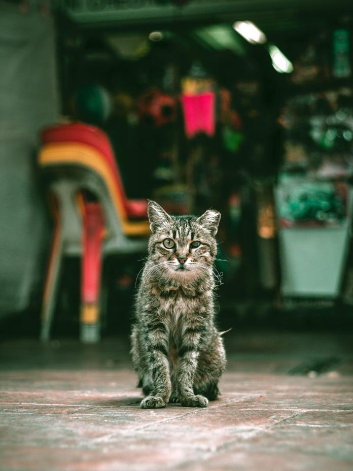 biodegradable cat litter eco-friendly