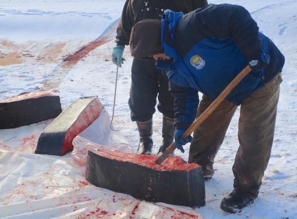 7. Whale cutting Barrow