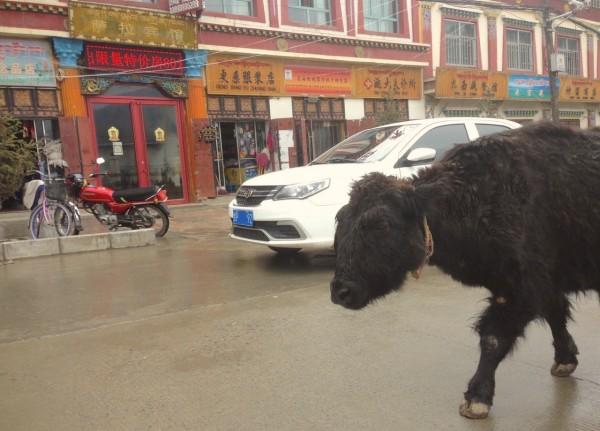 Geely Jingang Xiahe China 2016