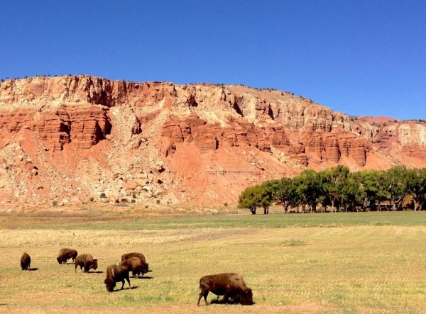 Capitol Reef NP Pic2