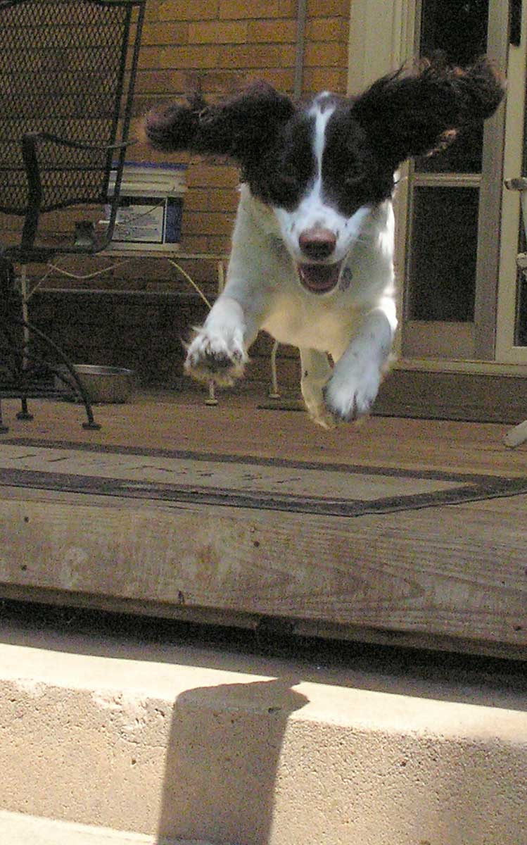 Trixie flying off porch